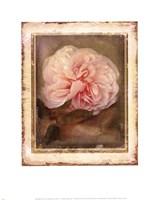 CABBAGE ROSES Fine-Art Print