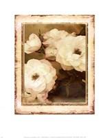ROSE- WHITE Fine-Art Print