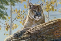 Front Range Cougar Fine-Art Print