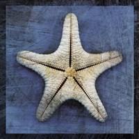 Armored Starfish Underside Fine-Art Print