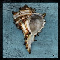 Horned Whelk Fine-Art Print