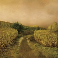Sunset Cornfield Fine-Art Print