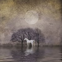 White Horse in Pond Fine-Art Print