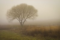 Tree in Field Fine-Art Print