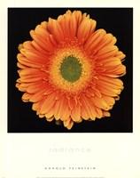 Radiance Fine-Art Print