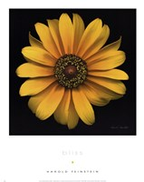 Bliss Fine-Art Print