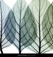 Celosia Leaves I Framed Print