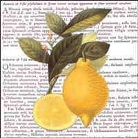 Citrus Edition I Fine-Art Print