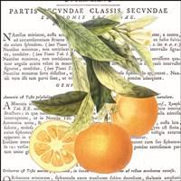 Citrus Edition II Fine-Art Print