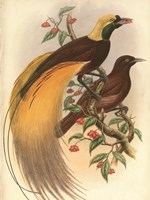 Golden Bird of Paradise Fine-Art Print
