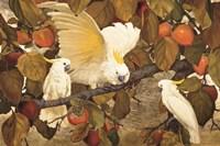 Persimmons & Cockatoos Fine-Art Print