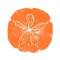 Orange Sand Dollar Fine-Art Print