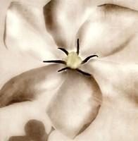 Whisper of Gardenia Fine-Art Print