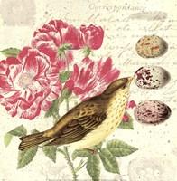 Bird Study 3 Fine-Art Print