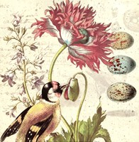 Bird Study 2 Fine-Art Print