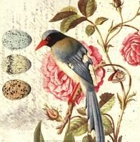 Bird Study 1 Fine-Art Print