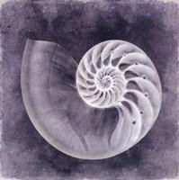 Ocean Blue IV Fine-Art Print