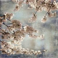 Aqua Blossoms II Fine-Art Print