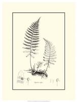 B&W Fern II Fine-Art Print
