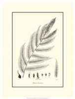 B&W Fern III Fine-Art Print