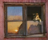 Kitten Window Fine-Art Print