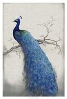 Peacock Blue II Fine-Art Print