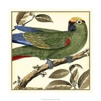 Tropical Parrot I Fine-Art Print