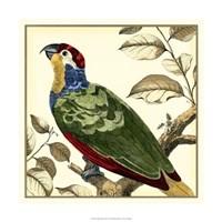 Tropical Parrot II Fine-Art Print