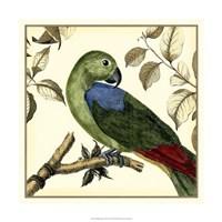 Tropical Parrot III Fine-Art Print