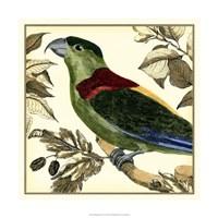 Tropical Parrot IV Fine-Art Print