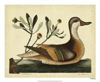 Ilatheria Duck, Pl. T93 Fine-Art Print