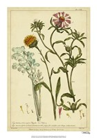 Iacea, Pl. CLll Fine-Art Print
