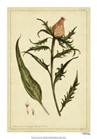 Iacea, Pl. CLIII Fine-Art Print