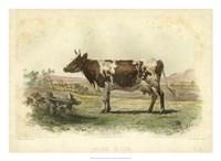 Vache D'Ayr Fine-Art Print