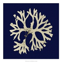 Seaweed on Navy I Fine-Art Print