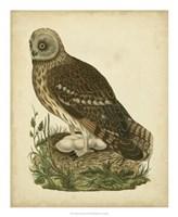Antique Nozeman Owl I Fine-Art Print