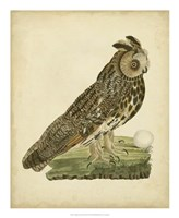 Antique Nozeman Owl III Fine-Art Print