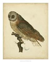 Antique Nozeman Owl IV Fine-Art Print