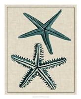 Coastal Starfish I Fine-Art Print