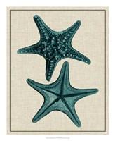 Coastal Starfish II Fine-Art Print