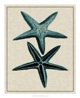 Coastal Starfish III Fine-Art Print