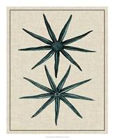 Coastal Starfish IV Fine-Art Print