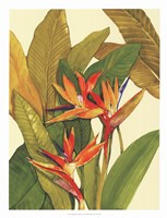 Tropical Bird of Paradise Fine-Art Print