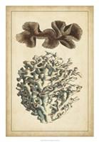 Coral Companion II Fine-Art Print