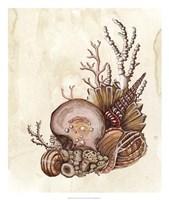 Baroque Nautilus I Fine-Art Print
