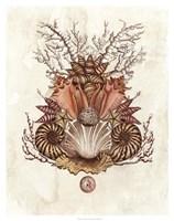 Baroque Nautilus II Fine-Art Print