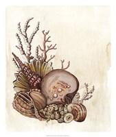Baroque Nautilus III Fine-Art Print