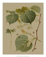 Forest Foliage I Fine-Art Print