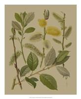 Forest Foliage II Fine-Art Print