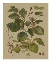 Forest Foliage III Fine-Art Print